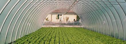 Irrigatori professionali per serre e ortaggi a finissima for Irrigazione serra